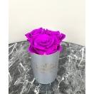 3-lillaka roosiga karp