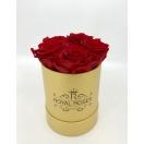 5- punast roosi kuldses karbis