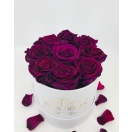 7-lilla roosiga karp