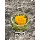 1-kollase roosiga vaas+kauakestev sammal