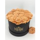 15- CARAMEL roosiga karp