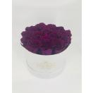 15-lilla roosiga karp
